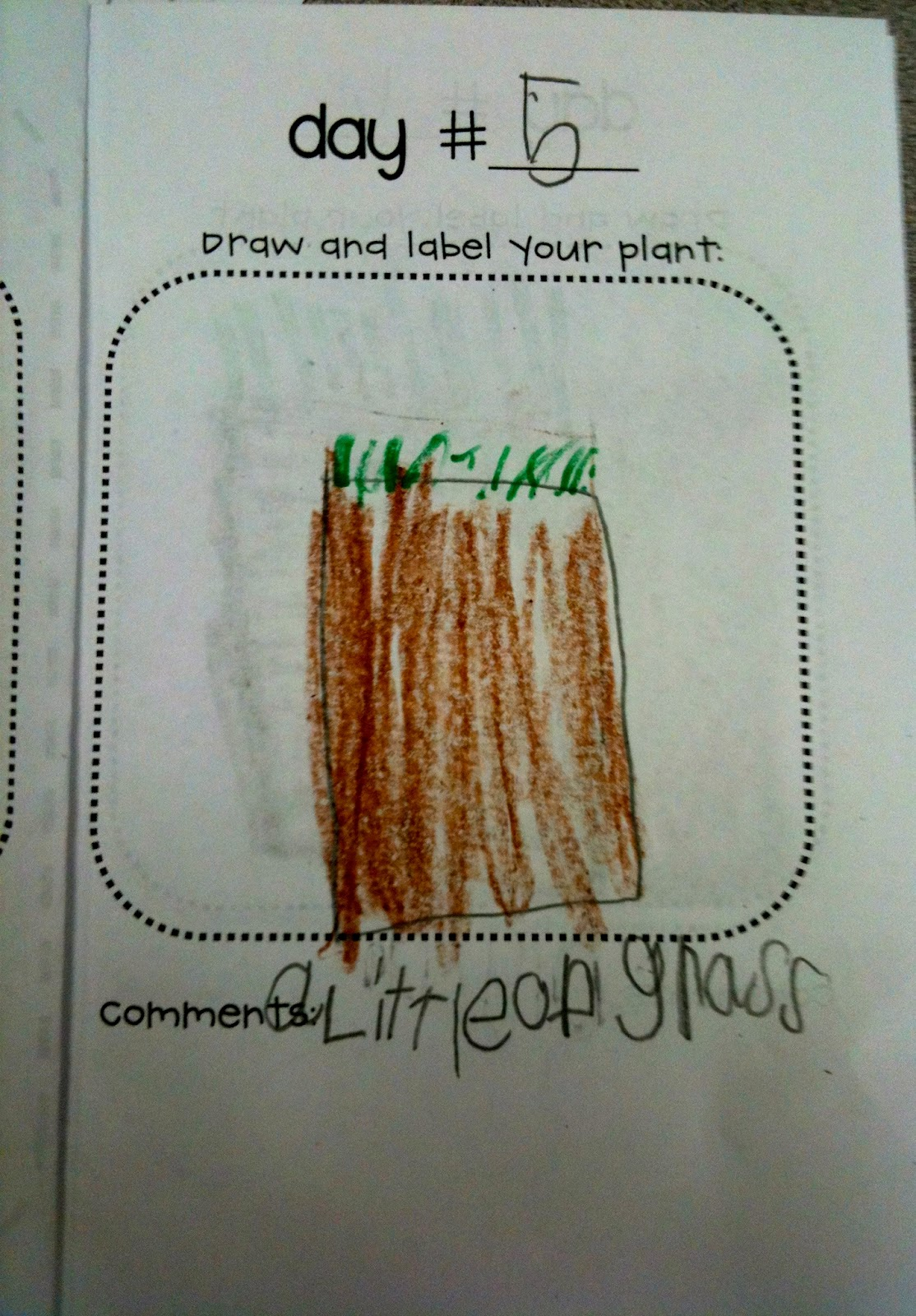 Kindergarten Superkids More Plants