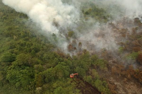 Polisi Menetapkan Sebanyak 87 Tersangka Dari 100 Kasus Kebakaran Hutan