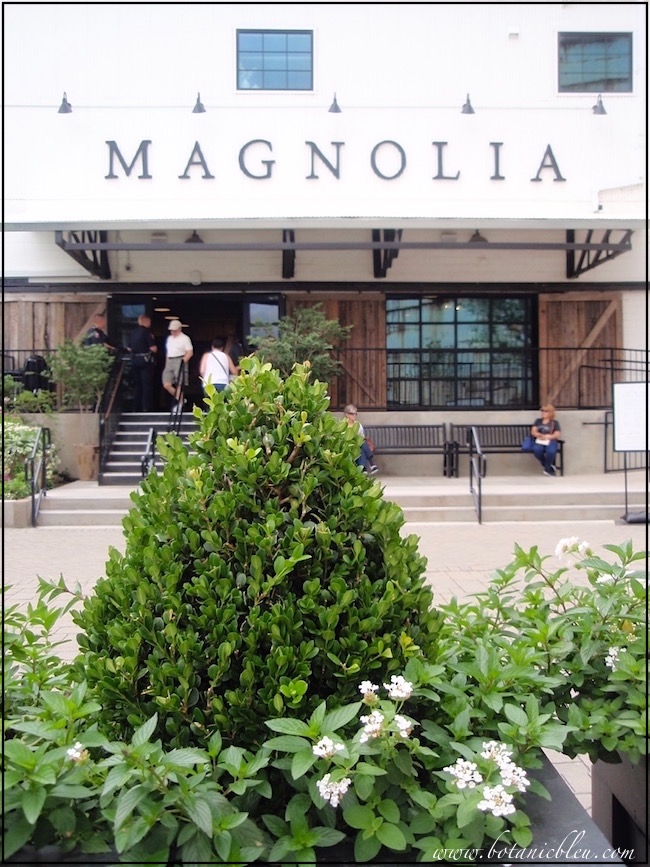 magnolia-market-waco-texas-with-boxwood-planter