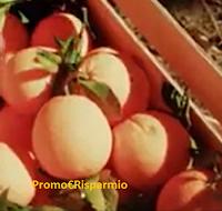 Logo Prova a vincere 20 kg. di agrumi ( arance,limoni, pompelmi e mandarini)