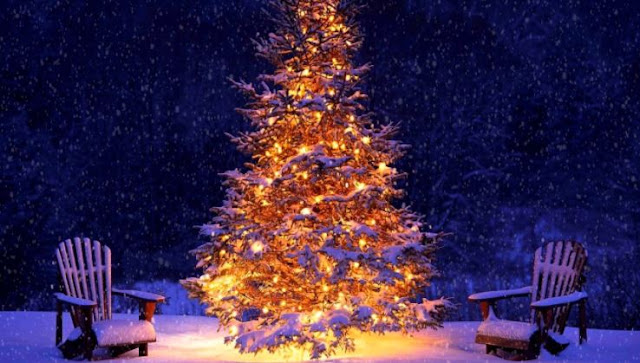 Christmas Tree Photos Images