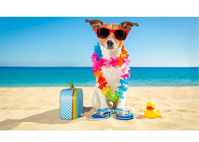 cachorro de chinelo e oculos escuros sentado na areaia da praia