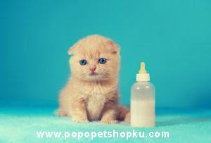 kucing minum susu 2- popopetshopku.com