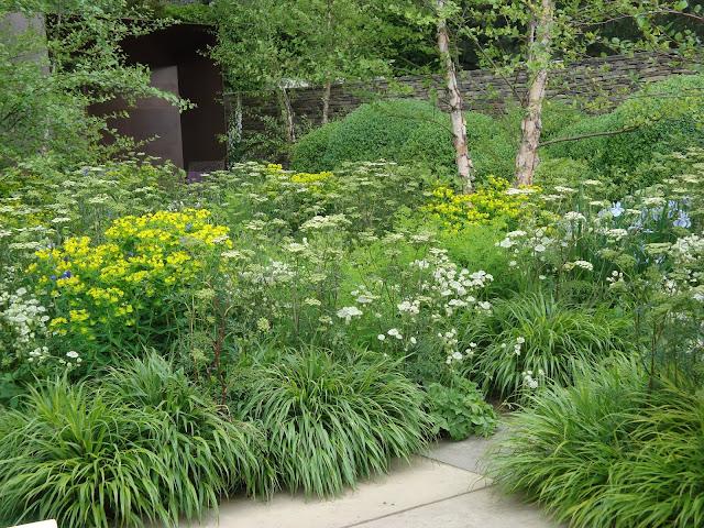 ogród bylinowy, hakonechloa macra