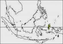 moluccan cuckoo Cacomantis aeruginosus map