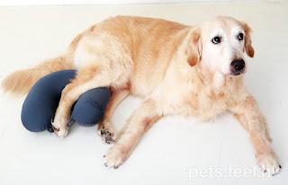 posição para cães com displasia