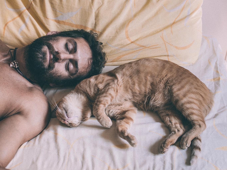 aea95416ebcb Αν είστε κηδεμόνας γάτας τότε σίγουρα καταλαβαίνετε ότι η γάτα σας ουδεμία  σχέση έχει με έναν σκύλο. Είναι ανεξάρτητη