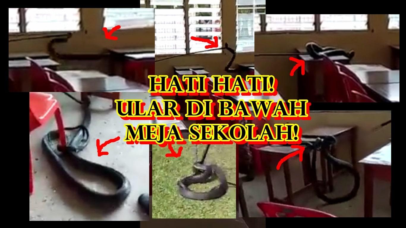 ular tedung dijumpai di bawah meja sekolah