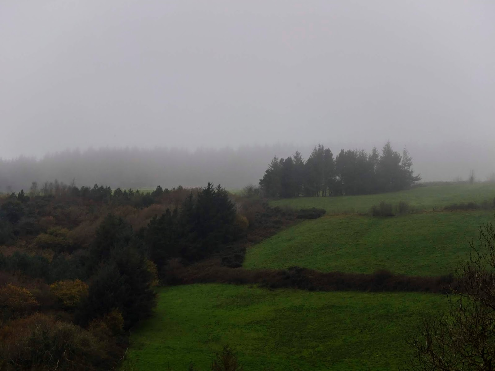 Top of a hill side and forestry in North County Cork covered in fog.
