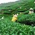 Assam – not just a land of tea gardens but much much more....
