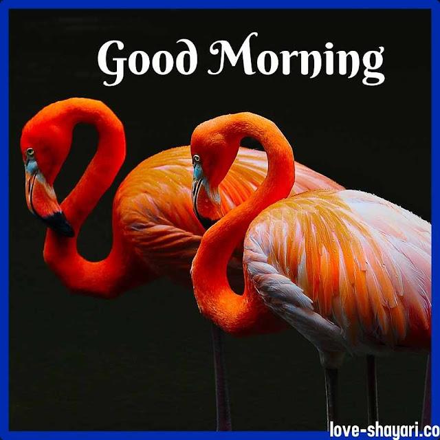 morning photo