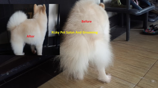 PROFESIONAL HOUSE CALL SALON AND GROOMING: Jasa Grooming Jakarta Serpong Poris Karawaci BSDRizky Pet | Pet Shop Salon And Grooming