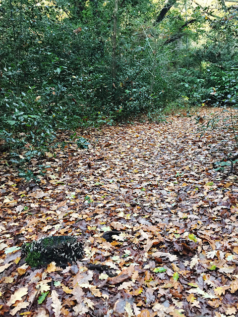 Woodland leaf litter and a dead stump.  Hayes Common, 22 November 2016.