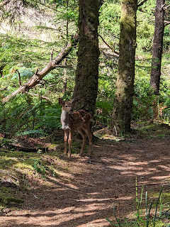 A forest path and a fawn in Pacific City.