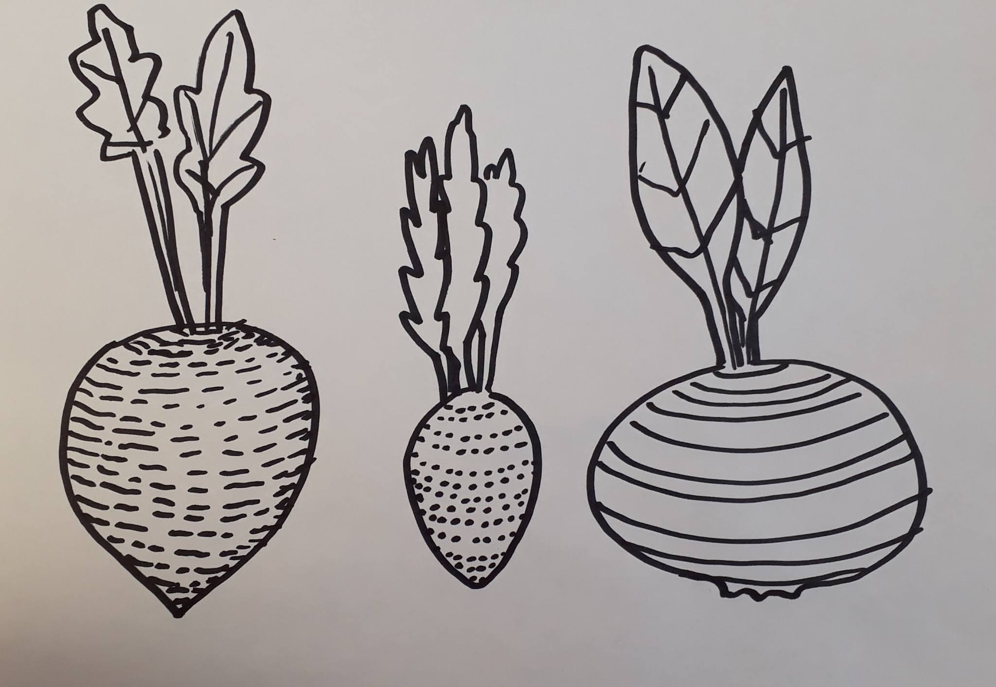Mustalla tussilla piirretyt juurekset