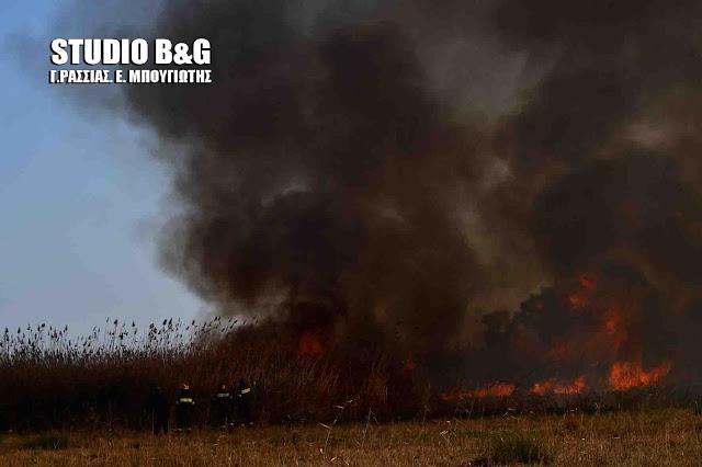 Πυρκαγιά στο βάλτο Νέας Κίου