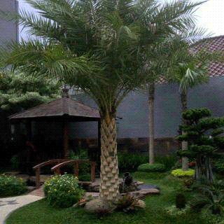 Palmkenarikuning