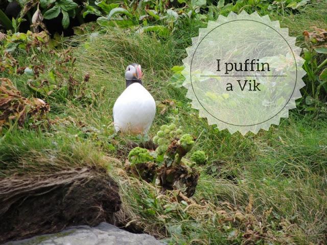 Alla ricerca dei puffin a Vik in Islanda