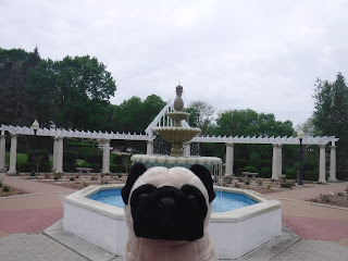 a plush pug appears in front of a pineapple topped fountain sitting in a brick pavilion, with a white pergola is in the background