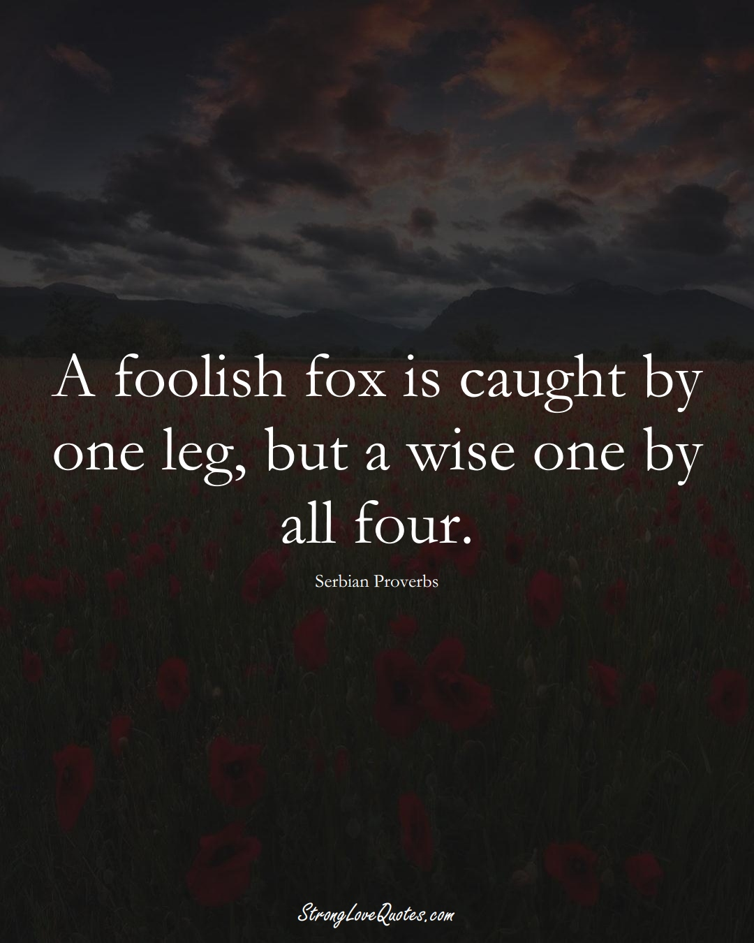 A foolish fox is caught by one leg, but a wise one by all four. (Serbian Sayings);  #EuropeanSayings