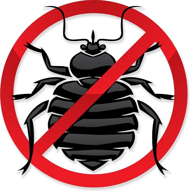 شركة مكافحة حشرات بعرعر (للإيجار) رش مبيدات خصم 15%