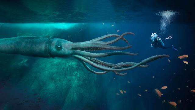 """Oceanographer Reveals Where the Giant Squids known as """"Krakens"""" Actually Lives"""