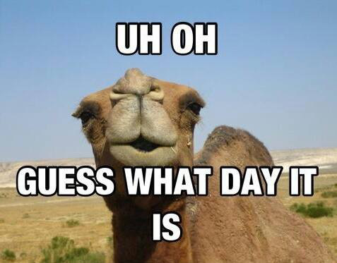 Hump Day Camel Pictures