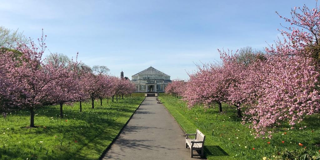 imágenes y vídeo jardines de Kew (Kew Gardens)