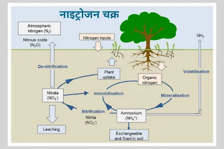 नाइट्रोजन चक्र - nitrogen cycle in hindi