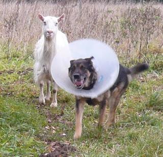 Milla und Hundu