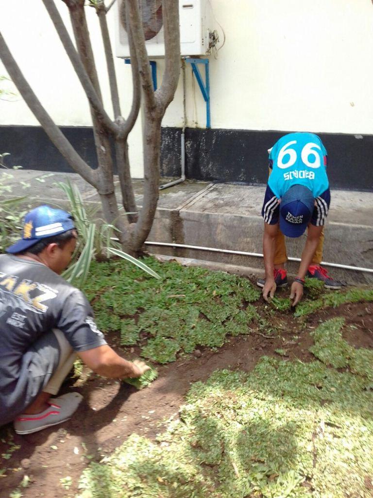 Penanaman rumput gajah mini PJB UNIT 1-2 PLTU PAITON PROBOLINGGO (memori kerja kami )