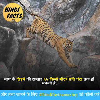 information of tiger in hindi
