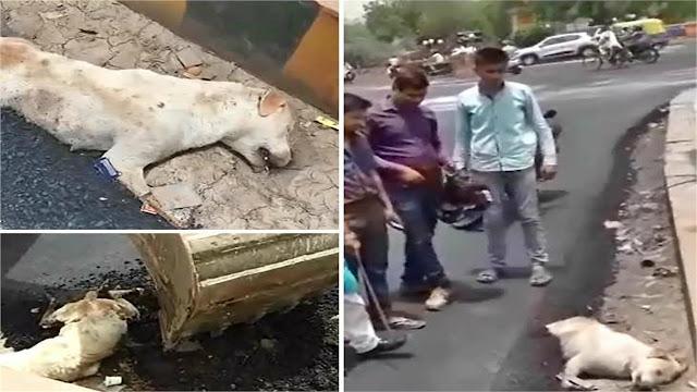कुत्ते पर बिछा दी सड़क, गर्म डामर और कांक्रीट में दबने से तड़पते हुए मौत