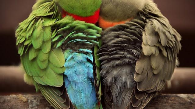 طيور,اجمل,طيور الحب,احلى,طيور الجنة,الطيور,اغلى الطيور,شراء الطيور,صور الطيور,اجمل الوان الطيور,المنصور,مثير,أجمل,هذا الفيديوا,الدنيا,تزاوج طيور الحب,اجمل الوان طيور البادجي,الطيور النادرة,الرياض,الوان,اغنية,فيديو,الجنة,الملك,الجديدة,الكروان,بدون إيقاع