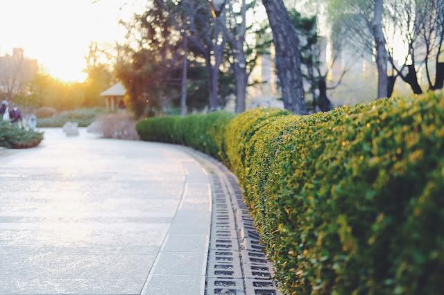 Hedge alongside road: Photo by wang kenan on Unsplash