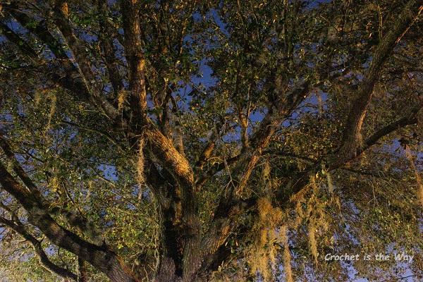 photography, long exposure, nature, oak, moss