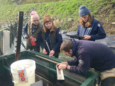 A supervisor measures a fish at a smolt trap in a creek, while three AmeriCorps members assist.