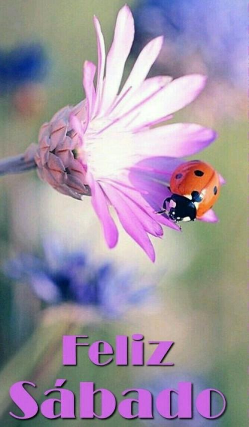 Feliz Sábado - Flor Morada