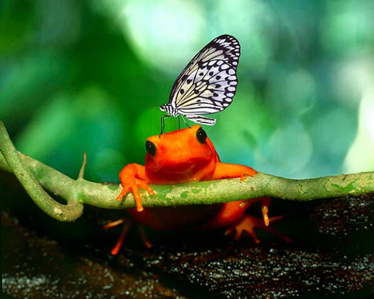 Hd wallpapers frog wallpapers - Frog cartoon wallpaper ...