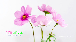 Beautiful Good Morning wishes With pink Flowers