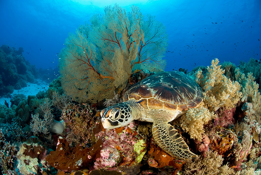 turtle cannibalism delightful departures with scuba travel ventures