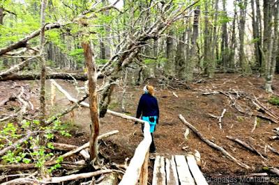 Camino a la Castorera de Parque Nacional Tierra del Fuego, Ushuaia, Argentina.