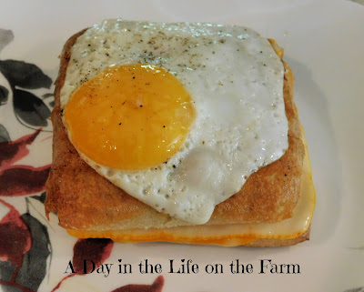 Grilled Cheese Panini with Egg