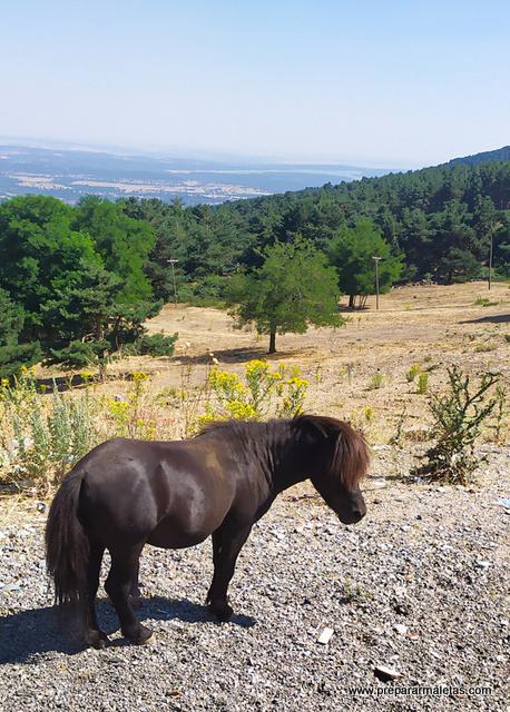 senderismo fácil y familiar cerca de Madrid