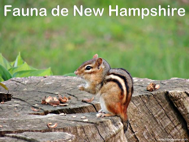 Fauna de New Hampshire: Terrestres