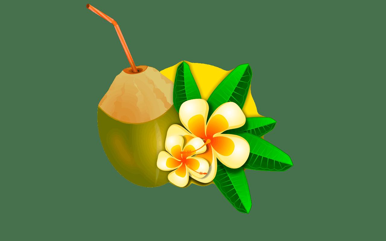 coconut clipart coconut clip art vector coconut clip art vector