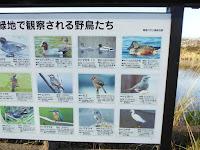 打上川治水緑地で観察される野鳥たち