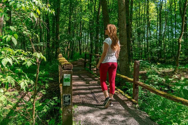 Westerwaldsteig Etappe 6 von Freilingen nach Nistertal  Westerwälder Seenplatte – Stöffelpark 06