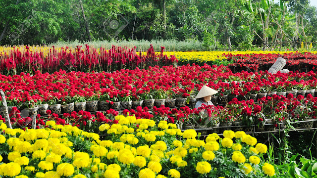 Sa Dec Flower Gardens in Mekong delta, Vietnam 8