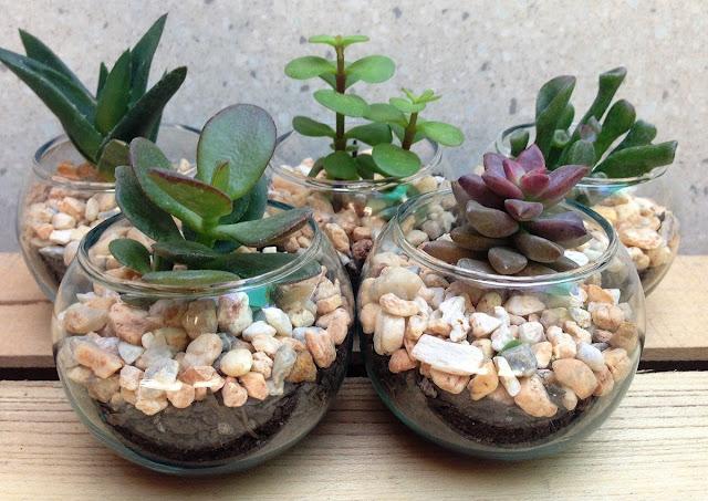 Mini terrarios para souvenirs
